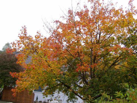 Herbst04